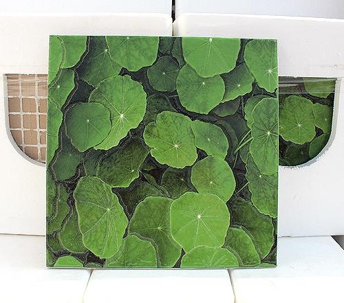 绿荷叶地砖